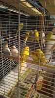 Budgies, finches, and canaries