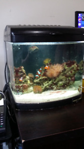 Nice 12 gallon Nano tank for sale at Senior and Son Aquatics!