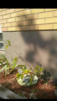 Foundation parging/weather proofing