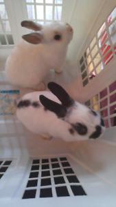 Bébé lapins