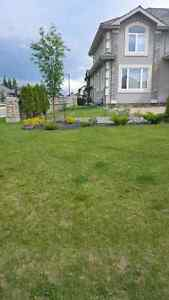 Fall Clean Ups 30$/hr available all week liscenced and inscured Strathcona County Edmonton Area image 5