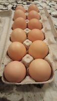 Chicken eggs for sale