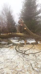Tree removal yard work or dump runs  thanks call Phil