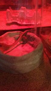 lizard and aquarium