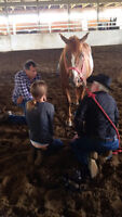 USE YOUR LOVE OF THE HORSE TO HELP OTHERS