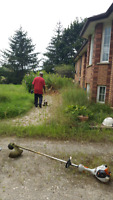Yard Clean Up & Eaves Trough Cleaning