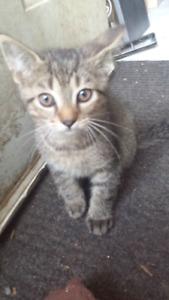 Free 11 week old Kittens!