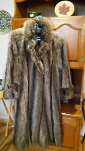 manteau de chat sauvage à peaux allongées de couleur gris argent