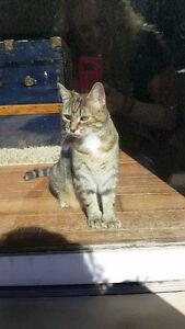 MISSING CAT -- NEW SUDBURY AREA