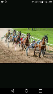 Looking for a Standardbred Race Horse!