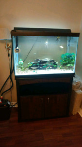 65 Gallon Fish Tank & Stand