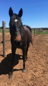 Horses for Part-lease available