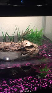 2 Mississippi map turtles with everything included
