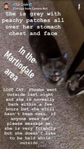 Lost Cat in the south end area Martindale/Regent