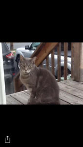 Cat found in Sackville, may have travelled