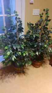 Two large artificial plants $35.00 St. John's Newfoundland image 1