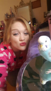 Lost my white and blue budgie!!