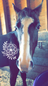 APHA registered yearling filly