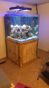 120 gallon rimless cube great for a saltwater or fresh aquarium