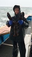 Looking for lobster fishing job this spring