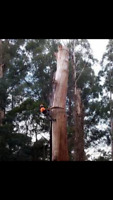 all in one arborists - you name it we do it 780-680-6009