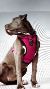 NEW CANADA POOCH EVERYTHING DOG HARNESS