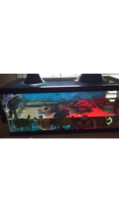 20gal aquarium for sale : best offer wins - need gone!