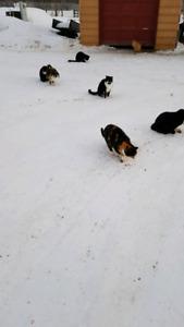 Farm cats free