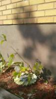 Foundation parging/weather sealing