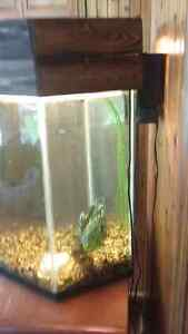 Fish tanks for sale or trade