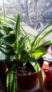 Plants - House Plants for Sale