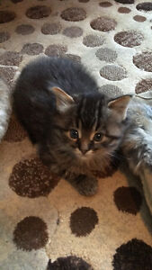 Kittens looking for Forever Families