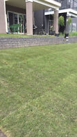 SOD and Other Landscaping Services