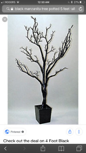 Black manzanita tree - wedding decor rental - 5 foot trees