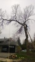 Tree Removal & Tree Trimming /Two Guys Tree Services289-600-1374