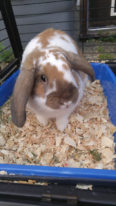 Rehoming our bunny