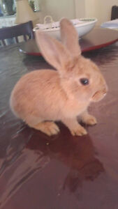 Cutest little bunny for rehoming