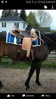 16 inch Flashy Western Saddle