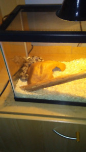 Snake and tank for sale