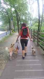 Reliable DOG WALKER available Brampton/Vaughan/Woodbridge