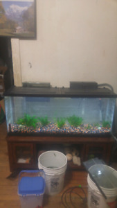 55 gal tank and fish for sale