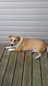cookie is a 1 yr old male, basset hound mix