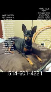 CHIEN PERDU/ LOST DOG
