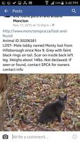 Is this your Cat? Trying to find Monty's owners.