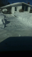 EXPERIENCED DRIVEWAY SNOW REMOVAL !!!