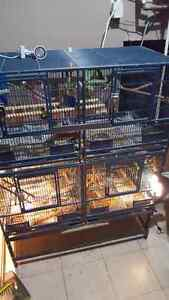Birds & Cages For Sale!