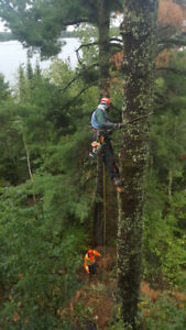 Tree Service Business for Sale