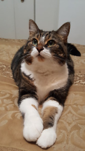 Cat sitting - West Island Cats - Spoil your cat!!!