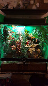Selling of Crested Gecko collection $800 for all