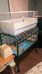 Rat family with cages